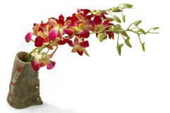 Orchid. Three red and yellow orchid sets in a hand-made vase stock photos