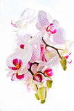 Orchid. Orchid flower, contrast, on a light background Stock Photo