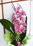 Orchid Stock Photography