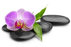 Orchid. Zen basalt stones and orchid  on white Stock Photos