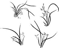 Orchid. Vector illustration for a artistic china traditional art brush painting for orchid Stock Photo