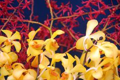 Orchid. Yellow and red orchid branches Royalty Free Stock Photos