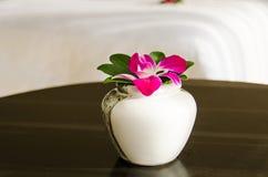 Orchid_04 库存图片