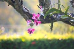 Orchid1 Image libre de droits
