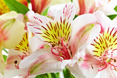 Orchid Stock Image