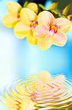 orchid Arkivbild