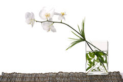 Orchid. Beautiful orchid with green leaf in vase on mat royalty free stock photos