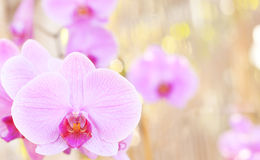 Orchid on the abstract blurred background Royalty Free Stock Photography