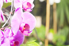 Orchid on abstract blurred background Royalty Free Stock Image