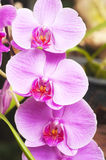 Orchid on abstract blurred background Royalty Free Stock Images