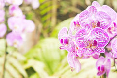 Orchid on abstract blurred background Stock Photos