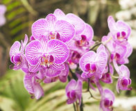 Orchid on abstract blurred background Stock Image