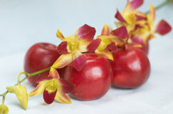 Orchid on apples. Orchid on red apples on a white background Royalty Free Stock Image