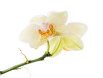 Orchid arrangement centerpiece isolated on white. Stock Images