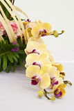 Orchid arrangement in flower basket. For decorating on round table Royalty Free Stock Photo