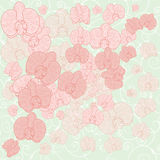 Orchid background Royalty Free Stock Photos