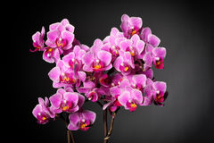 Orchid background Stock Photos