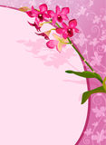 Orchid background Stock Images