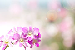 Orchid on the background bokeh. Stock Photo