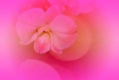 Orchid and  background Royalty Free Stock Photo