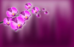Orchid background Royalty Free Stock Image