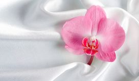 Orchid. On a background of silk Stock Photos