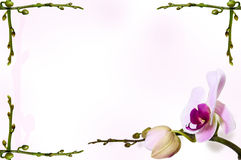 Orchid background on stem backdrop. Stems in the corners Stock Photos