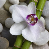 Orchid and bamboo Royalty Free Stock Images