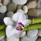 Orchid and bamboo Stock Image