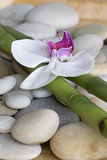 Orchid and bamboo Stock Photos