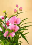 Orchid and Bamboo Stock Images