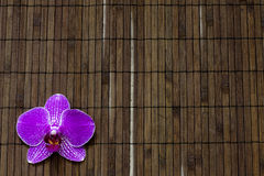 Orchid on bamboo mat spa cosmetic abstract background Stock Photos