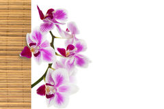 The orchid and bamboo Stock Image