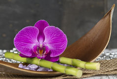 Orchid and Bamboo Stock Photography