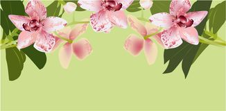 Orchid Banner,  illustration nature tropic green royalty free illustration