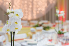 Orchid on the banquet table Stock Photos