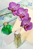 Orchid in the bathroom Royalty Free Stock Photography