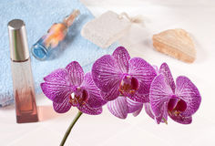 Orchid in the bathroom Stock Images
