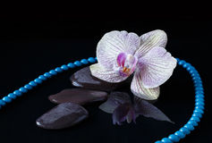 Orchid, bead and stones in water Stock Photos