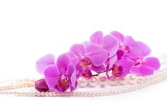 Orchid and beads from pearls on a white background royalty free stock images