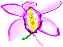 Orchid. Beautiful Orchid drawn by Adobe Illustrator Royalty Free Stock Images