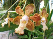 Orchid flower floral blossom Royalty Free Stock Image