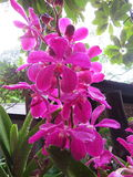 An orchid royalty free stock images