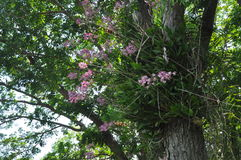 Orchid on the big tree in tropical park Stock Photos