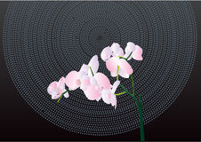 Orchid on black. Designer's background with tender flower orchid Royalty Free Stock Image