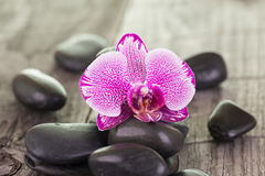 Orchid and black stones close up Royalty Free Stock Images