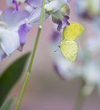 Orchid Blossom and butterfly Stock Photos