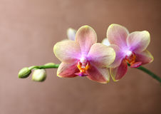 Orchid blossom detail Stock Photos