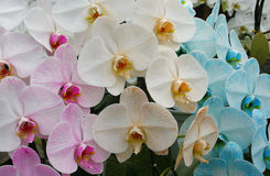 Orchid blossom flower tropical close up Stock Photos