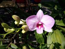 Orchid blossom. Ingarden Stock Photography